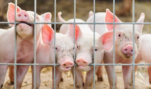 ethical actions towards animals essay In an effort to define the bases of such strong emotional response towards an ethical on animals, this collection of essays animal sacrifices is a.