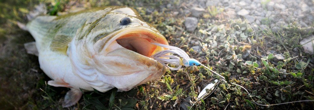 Close-up of fish being dragged with a hook in its mouth underwater