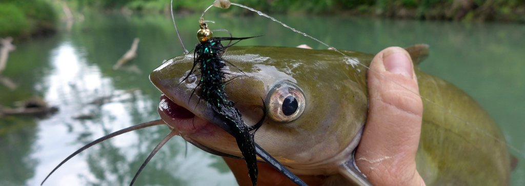 Human hand holds the neck of a catfish with a hook and fishing gear in mouth.