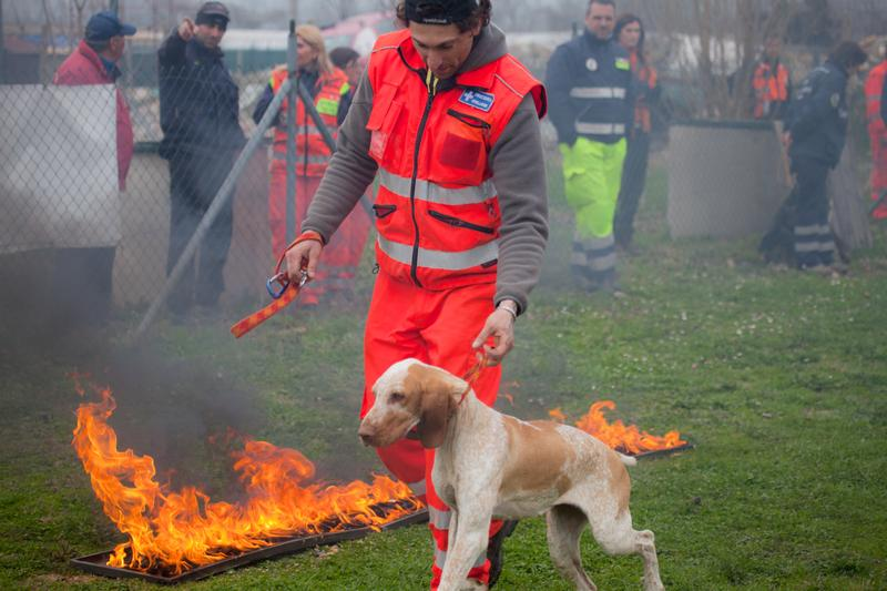 Dog Being Trained To Work Near Fire