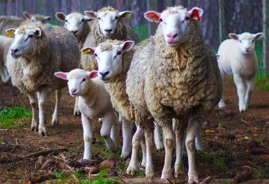 animals-and-politics-thumb