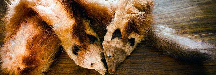 Tiere, die wegen ihres Fells gefangen werden - Animal Ethics
