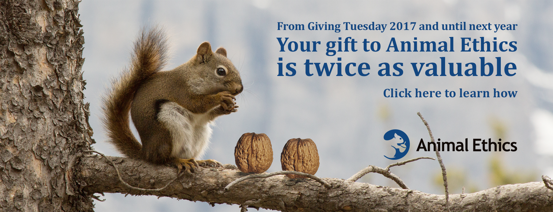 http://www.animal-ethics.org/wp-content/uploads/givingtuesday2017.png