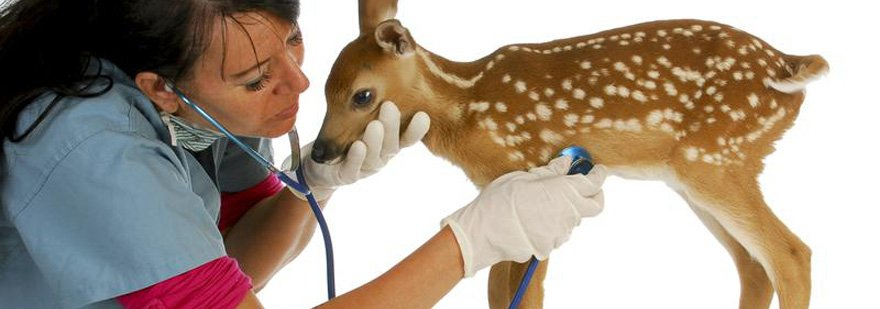helping animals in the wild animal ethics