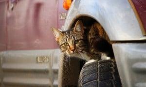 TOs danos causados por gatos em ambientes externos: novo relatório