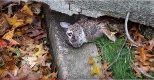 rabbit killed in hurricane