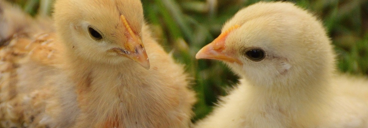 Animal Ethics Veganism section
